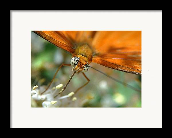 Butterfly Framed Print featuring the photograph Eyes Wide Open by Dan Holm