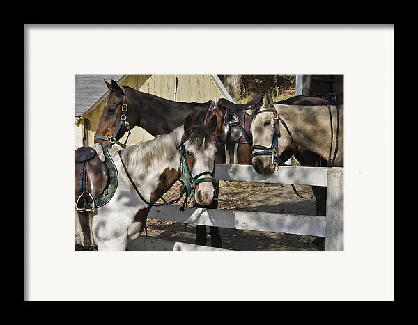 Horse Framed Print featuring the photograph Faces by Jack Goldberg