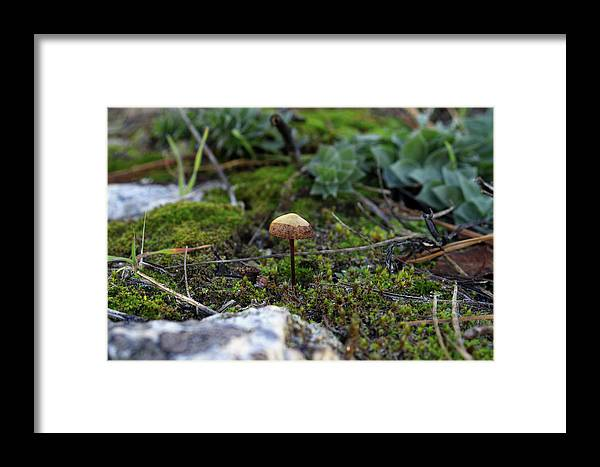 Mushroom Framed Print featuring the photograph Fairy Home by Gralyn Haller
