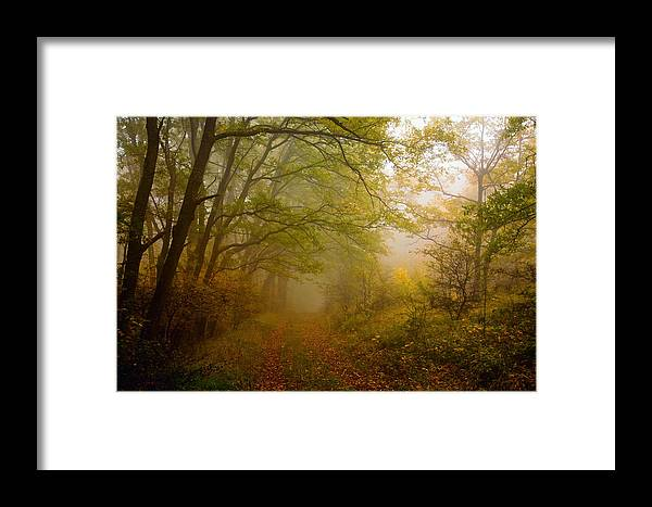 Mountain Framed Print featuring the photograph Fairy Wood by Evgeni Dinev