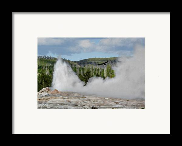 Old Faithful Geyser Framed Print featuring the photograph Falcon Over Old Faithful - Geyser Yellowstone National Park Wy Usa by Christine Till
