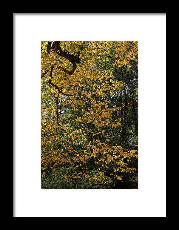 Fall Framed Print featuring the photograph Fall 2010 12 by Robert Ullmann