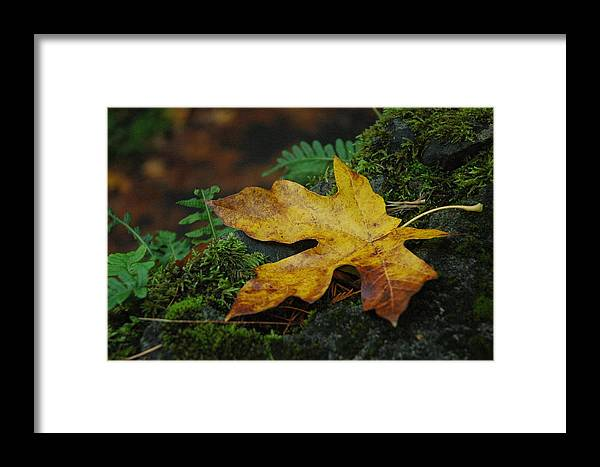 Foliage Framed Print featuring the photograph Fall Alone by Lori Mellen-Pagliaro