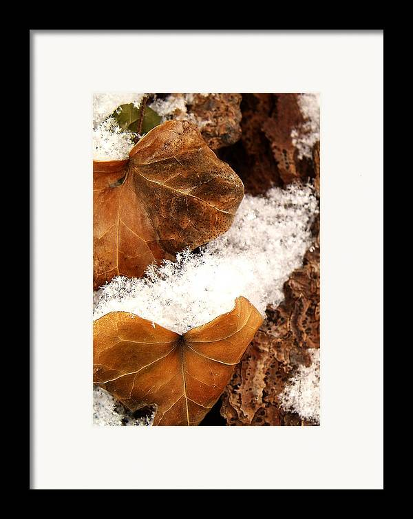 Fall Framed Print featuring the photograph Fall And Winter by Gaby Swanson