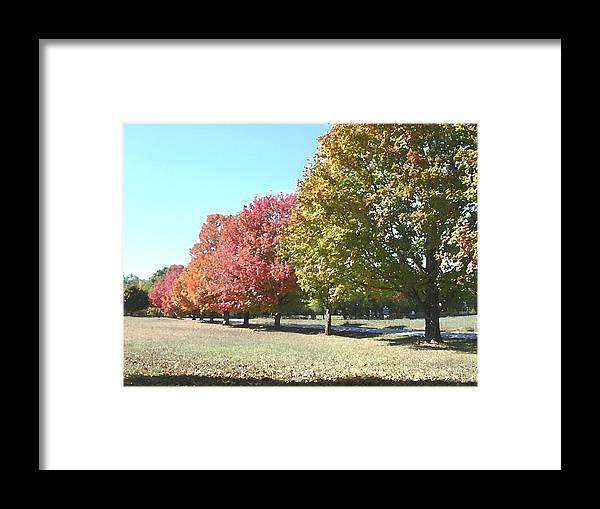 Trees Framed Print featuring the photograph Fall by Audrey Venute