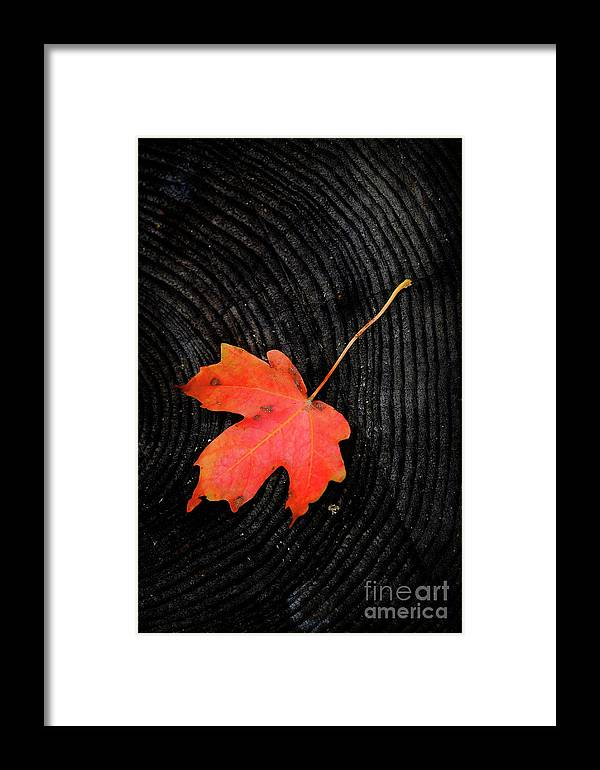 Autumn Framed Print featuring the photograph Fall Autumn Leaf On Old Weathered Wood Stump From A Tree by Lane Erickson
