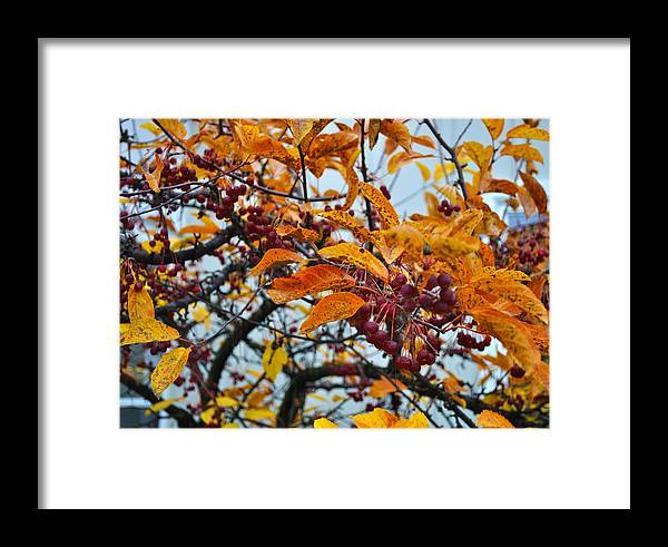 Berries Framed Print featuring the photograph Fall Berries by Tim Nyberg