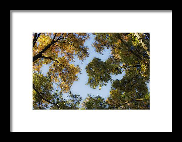 Fall Framed Print featuring the photograph Fall Canopy In Virginia by Teresa Mucha