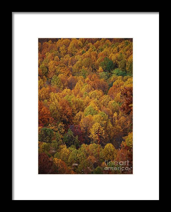 Fall Framed Print featuring the photograph Fall Cluster by Eric Liller