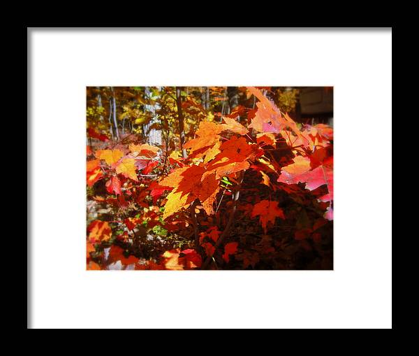 Red Framed Print featuring the photograph Fall Color 2 by John Julio