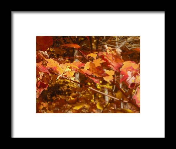 Orange Framed Print featuring the photograph Fall Color by John Julio