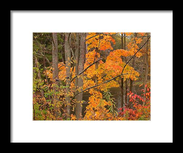 Fall Framed Print featuring the photograph Fall Color by Raju Alagawadi