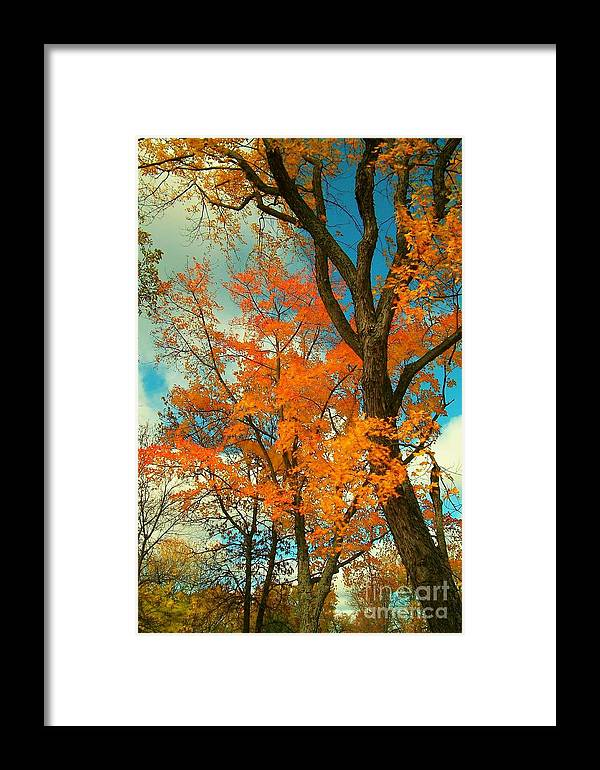 Fall Framed Print featuring the photograph Fall Colors 2 by Marjorie Imbeau