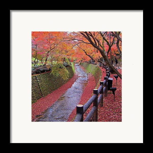 Square Framed Print featuring the photograph Fall Colors Along Bending River In Kyoto by Jake Jung