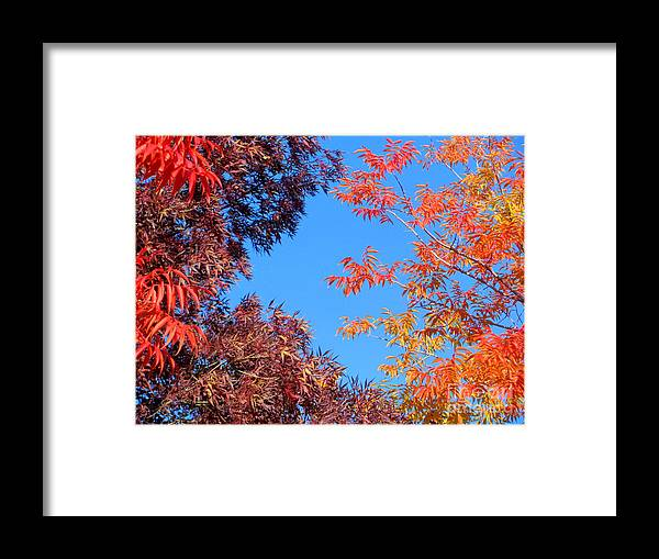 Fall Framed Print featuring the photograph Fall Colors by Irina Hays