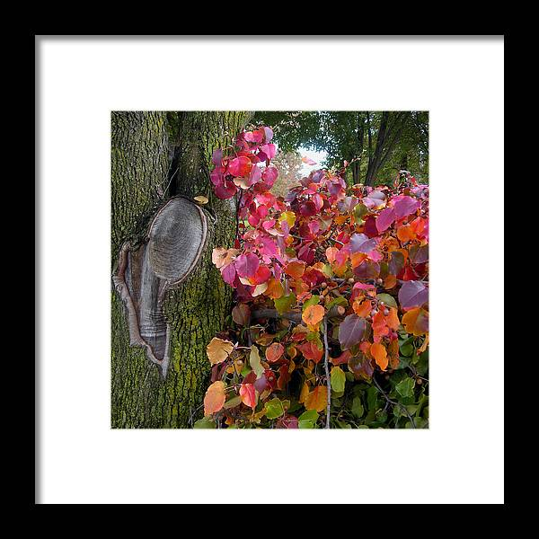 Fall Trees Framed Print featuring the photograph Fall Composition by John Lautermilch