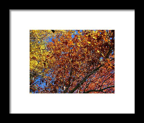 Fall Framed Print featuring the photograph Fall by Flavia Westerwelle