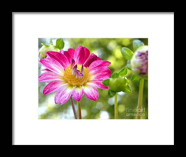 Floral Framed Print featuring the photograph Fall Flower Garden by Christine Belt