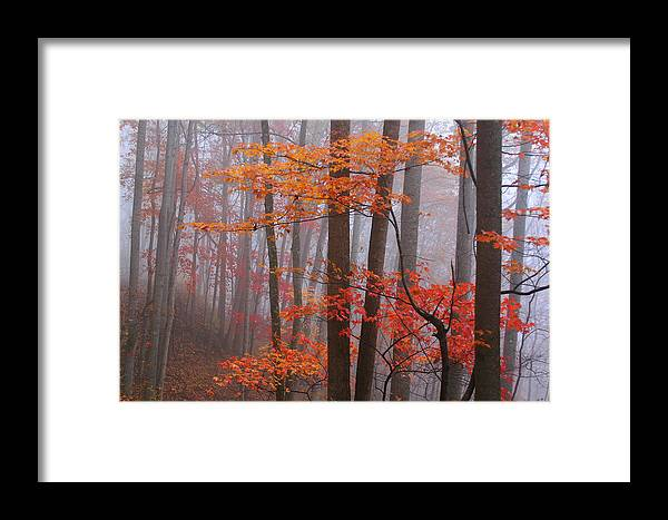 Landscape Framed Print featuring the photograph Fall Fog. by Itai Minovitz