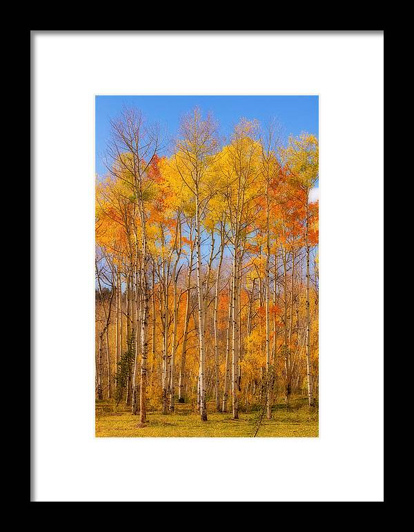 Trees Framed Print featuring the photograph Fall Foliage Color Vertical Image Orton by James BO Insogna