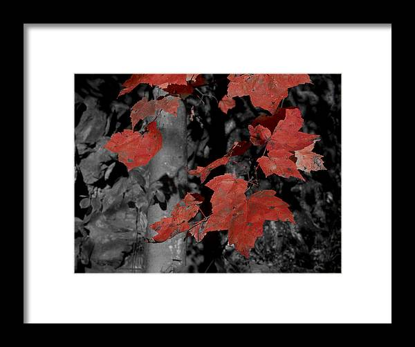 Nature; Pennsylvania; United States; Fall Foliage Framed Print featuring the photograph Fall Foliage In Pennsylvania by Bob Hahn