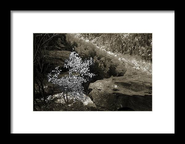 Nature Framed Print featuring the photograph Fall Foliage by Yuri Lev