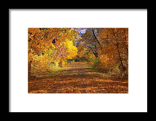 Fall Framed Print featuring the photograph Fall by Gwen Allen