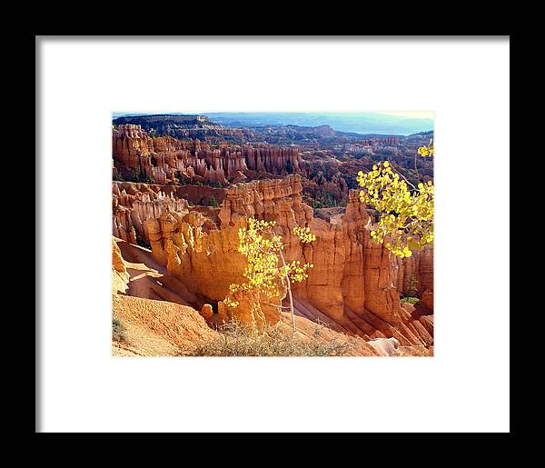 Bryce Canyon National Park Framed Print featuring the photograph Fall In Bryce Canyon by Marty Koch