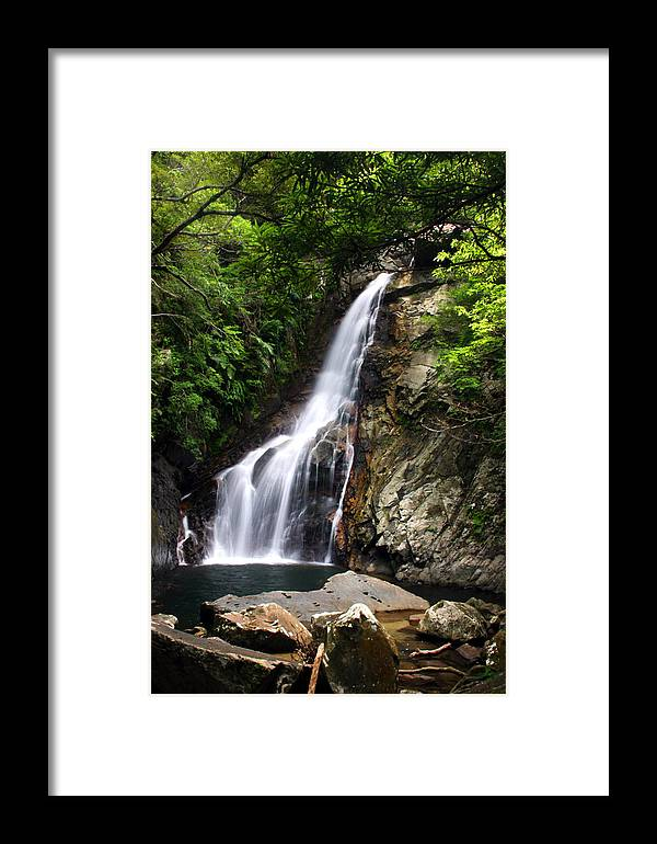 Okinawa Framed Print featuring the photograph Fall In Jungle by Francois Cantin