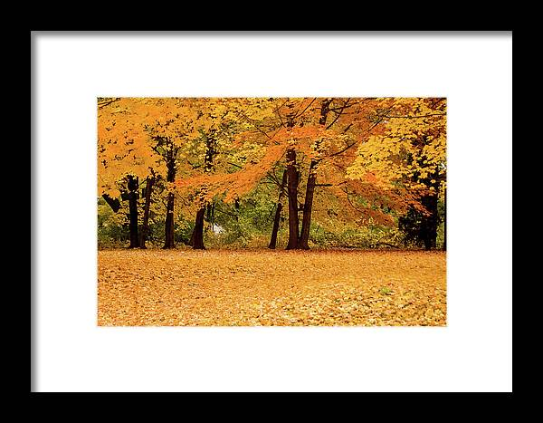 Autumn Framed Print featuring the photograph Fall In Lindstrom by Chip Jones