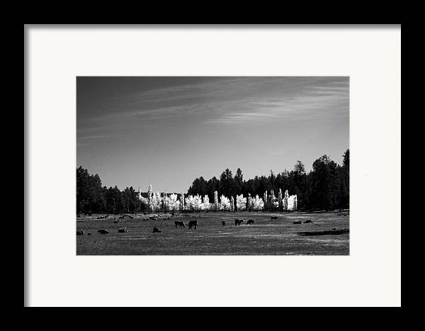 Landscape Framed Print featuring the photograph Fall In Line 2 by Randy Oberg