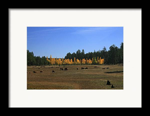 Landscape Framed Print featuring the photograph Fall In Line by Randy Oberg