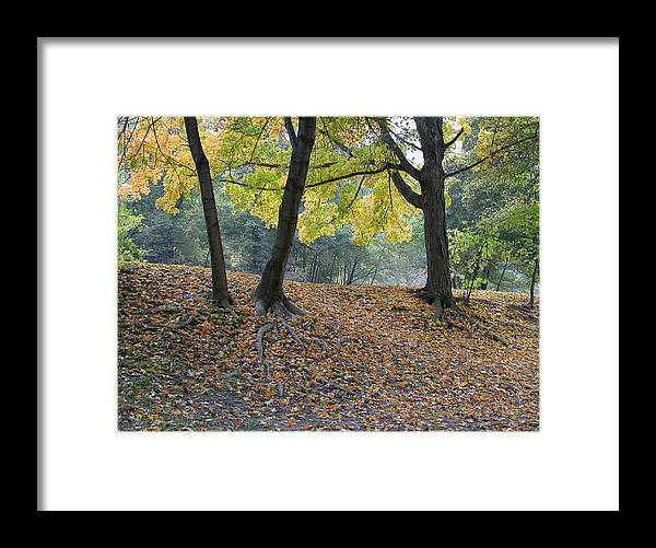 Autumn Framed Print featuring the photograph Fall In Stony Brook by Raju Alagawadi