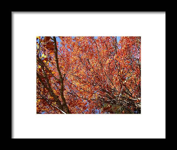 Fall Framed Print featuring the photograph Fall In The Blue Ridge Mountains by Flavia Westerwelle