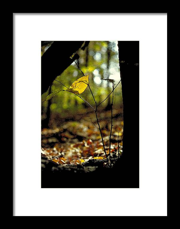 Leaf Framed Print featuring the photograph Fall Leaf And Twig by Thomas Firak