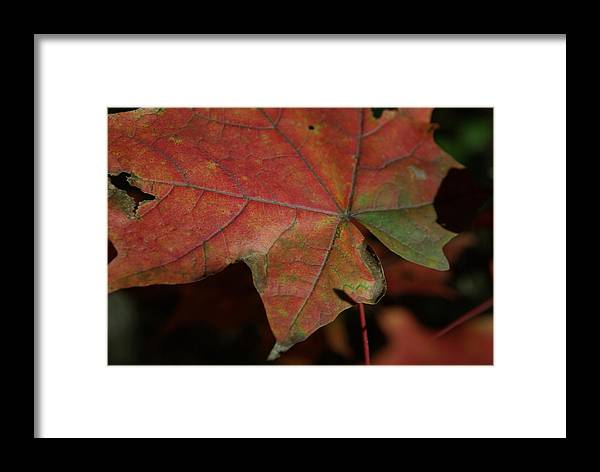 Fall Framed Print featuring the photograph Fall Leaves 1 by Eric Workman