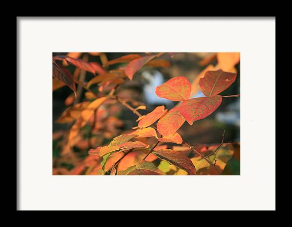 Leaves Framed Print featuring the photograph Fall Leaves by Linda Ebarb