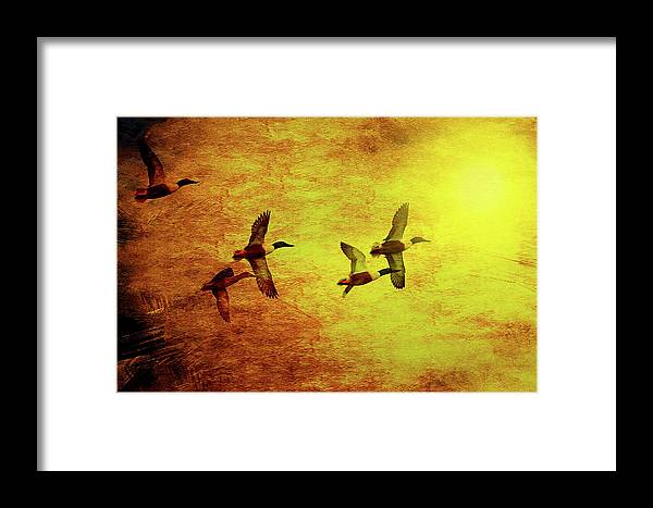 Bird Framed Print featuring the photograph Fall Migration . Northern Shovelers . Texture . 40d5393 by Wingsdomain Art and Photography