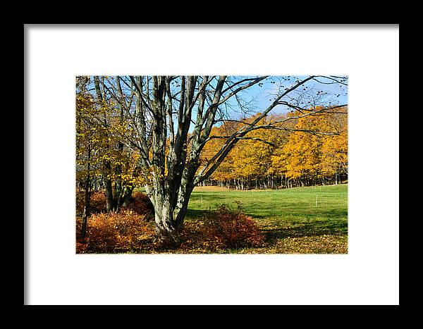 Trees Framed Print featuring the photograph Fall Pasture by Tim Nyberg