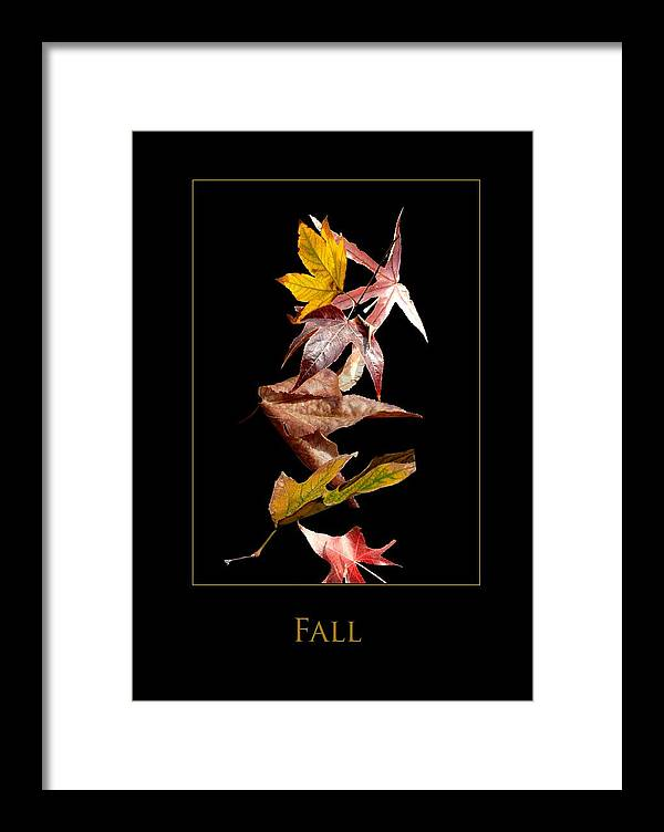 Framed Print featuring the photograph Fall by Richard Gordon