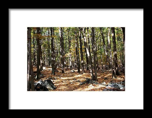 Fall Season Framed Print featuring the photograph Fall Season Woods by Robin Lynne Schwind