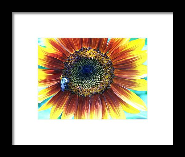 Sunflowers Framed Print featuring the photograph Fall Sunflower by Vijay Sharon Govender