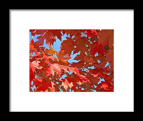 Autumn Framed Print featuring the photograph Fall Tree Leaves Red Orange Autumn Leaves Blue Sky by Baslee Troutman