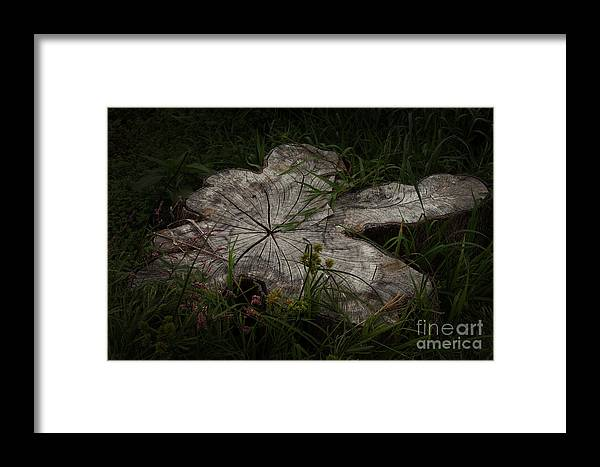Lovenz Framed Print featuring the photograph Fallen But Not Forgotten by Joanne Marshall