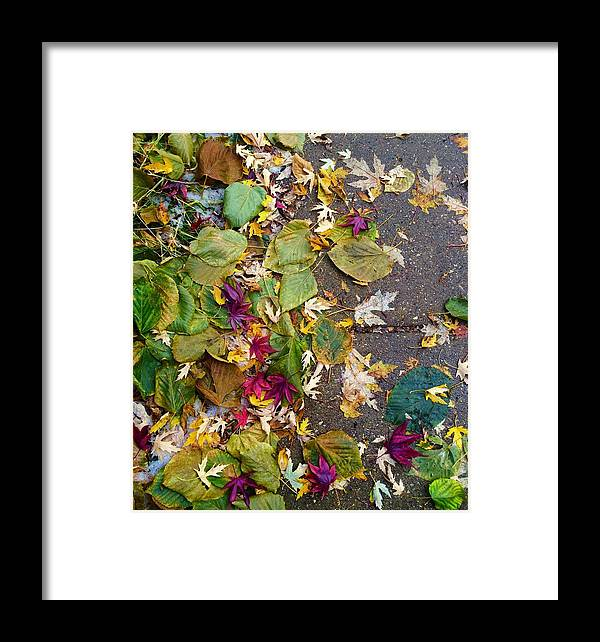 Leaves Framed Print featuring the photograph Fallen by Margaret Fronimos