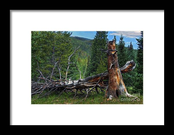 Landscape Framed Print featuring the photograph Fallen Tree by Pete Hellmann