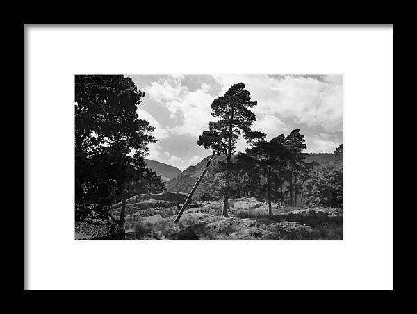 Black And White Framed Print featuring the photograph Fallen Tree by Terence Davis