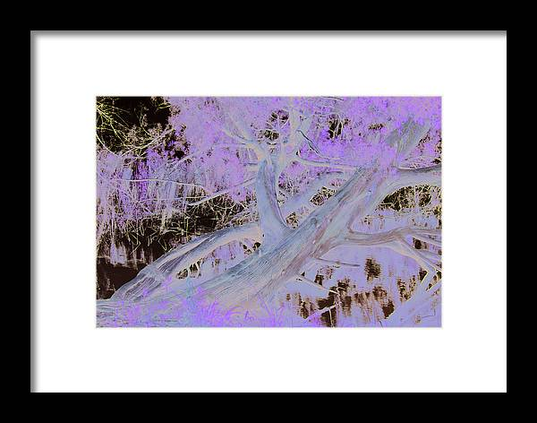 Tree Framed Print featuring the photograph Fallen Tree by Tracy Hayden
