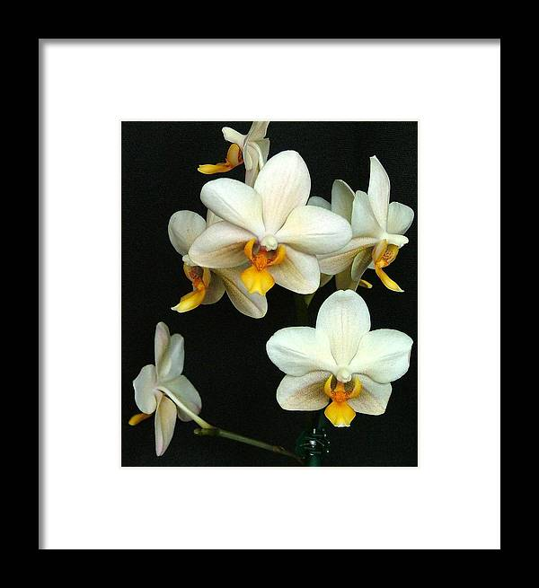 Botanical Framed Print featuring the photograph Falling Angels by Mindy Newman
