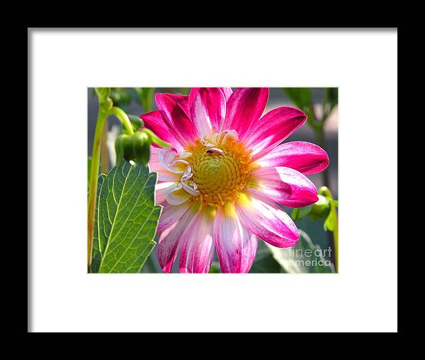 Floral Framed Print featuring the photograph Falls Glory by Christine Belt